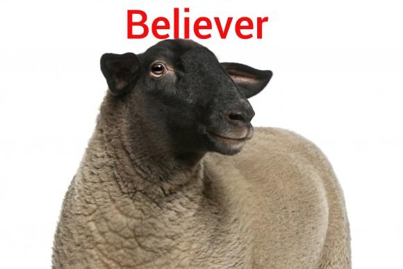 گوسفند روانشناسی