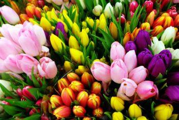 داستان راز گل فروشي رويا