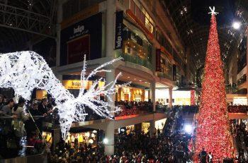مراسم افتتاح بزرگترین درخت کریسمس در تورنتو