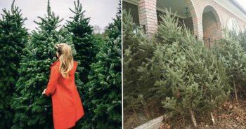 داستان مرد سخاوتمند کانادایی که به مردم درخت کریسمس رایگان میدهد
